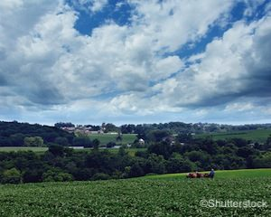 amish-farmer-in-field