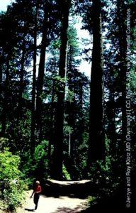 coastal-redwood-trees1