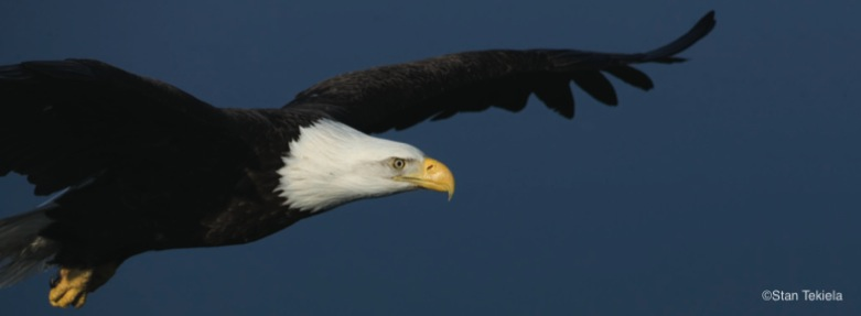 The Majesty Of Our Eagles Adventure Publications