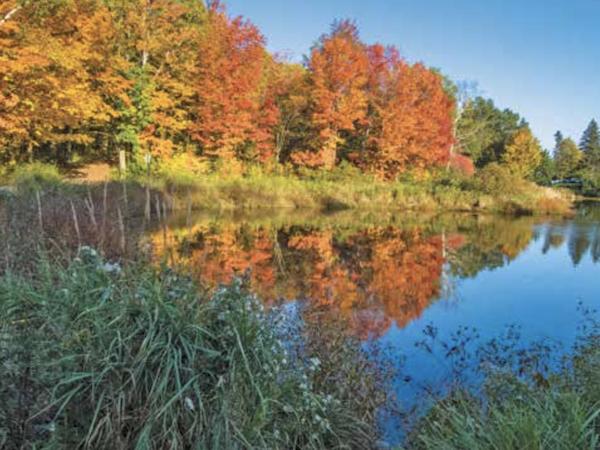Bagley Nature Area