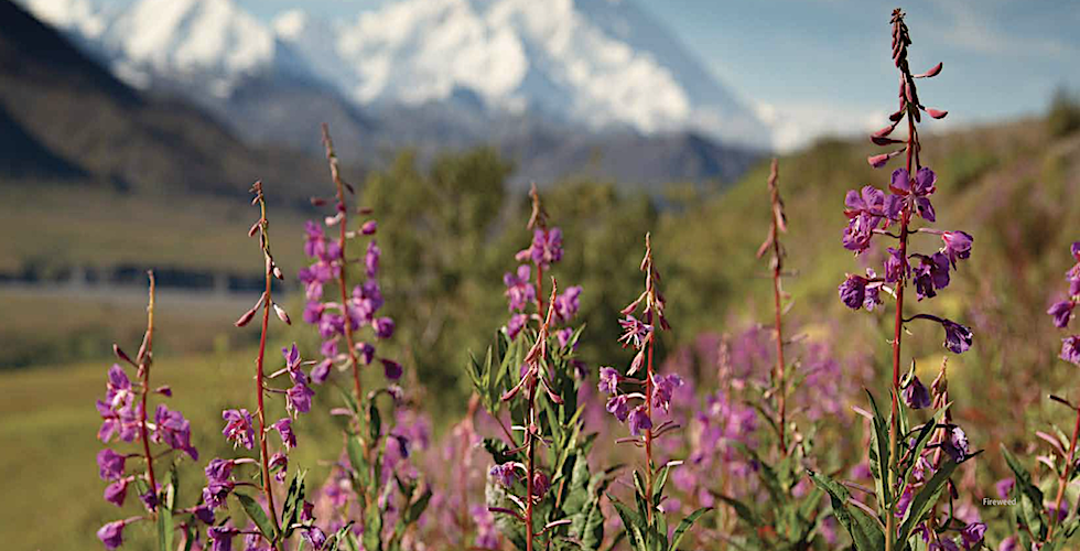 Wildflower banner