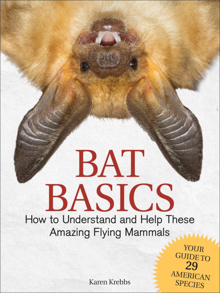 Bat Basics cover
