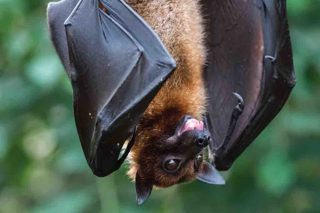 Bats Have an Incredible Story to Tell