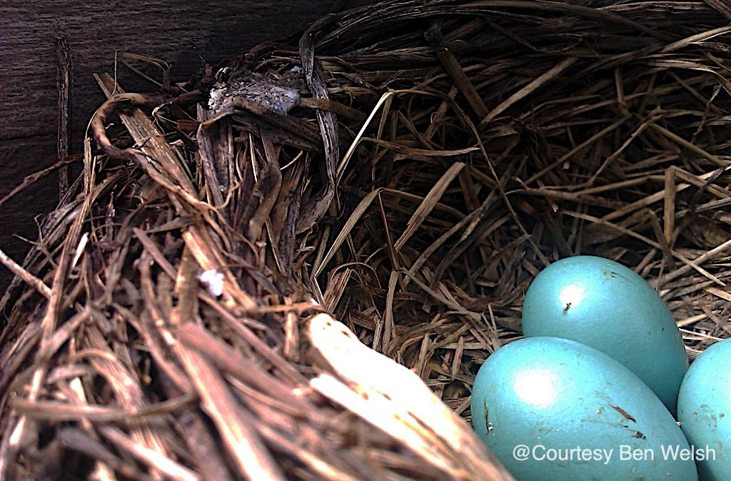 Natural Easter egg hunt