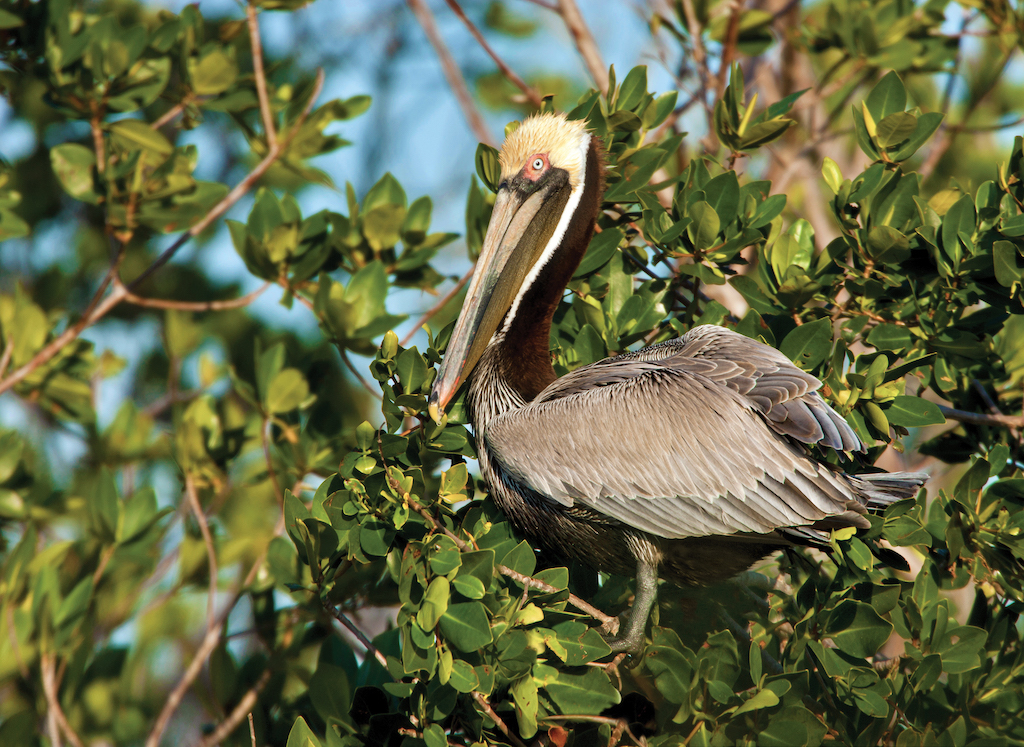 Kids' Guide to Birds of Texas