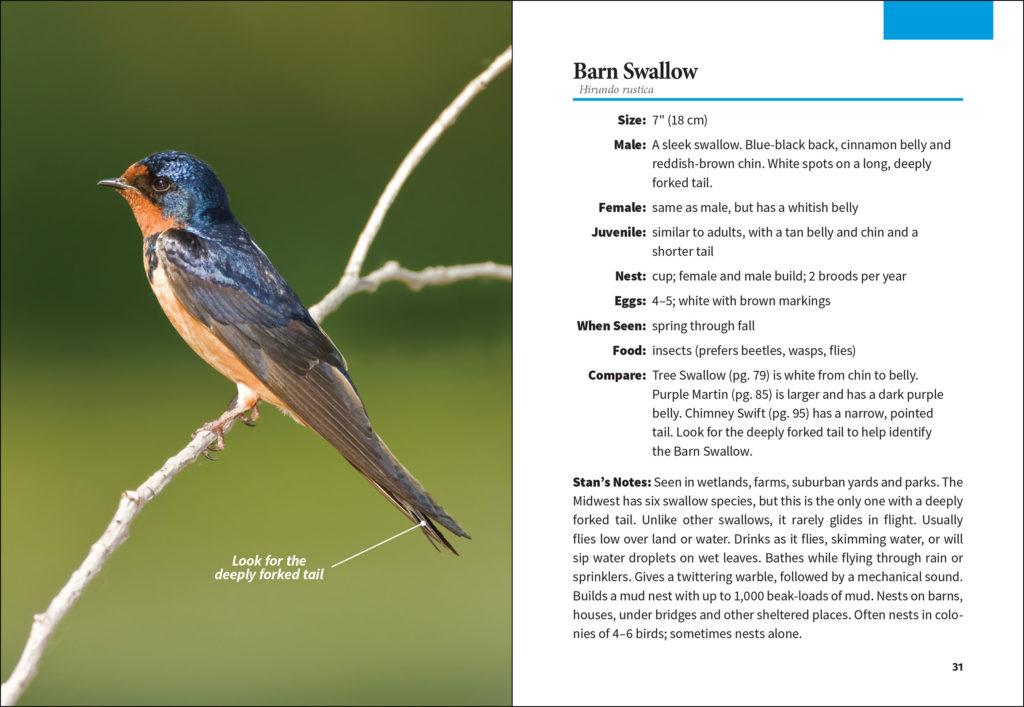 Birding for Beginners