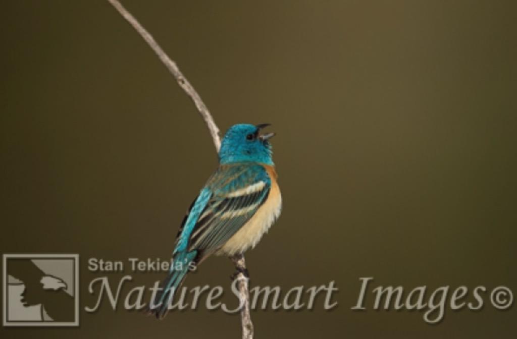 Birding for Beginners California