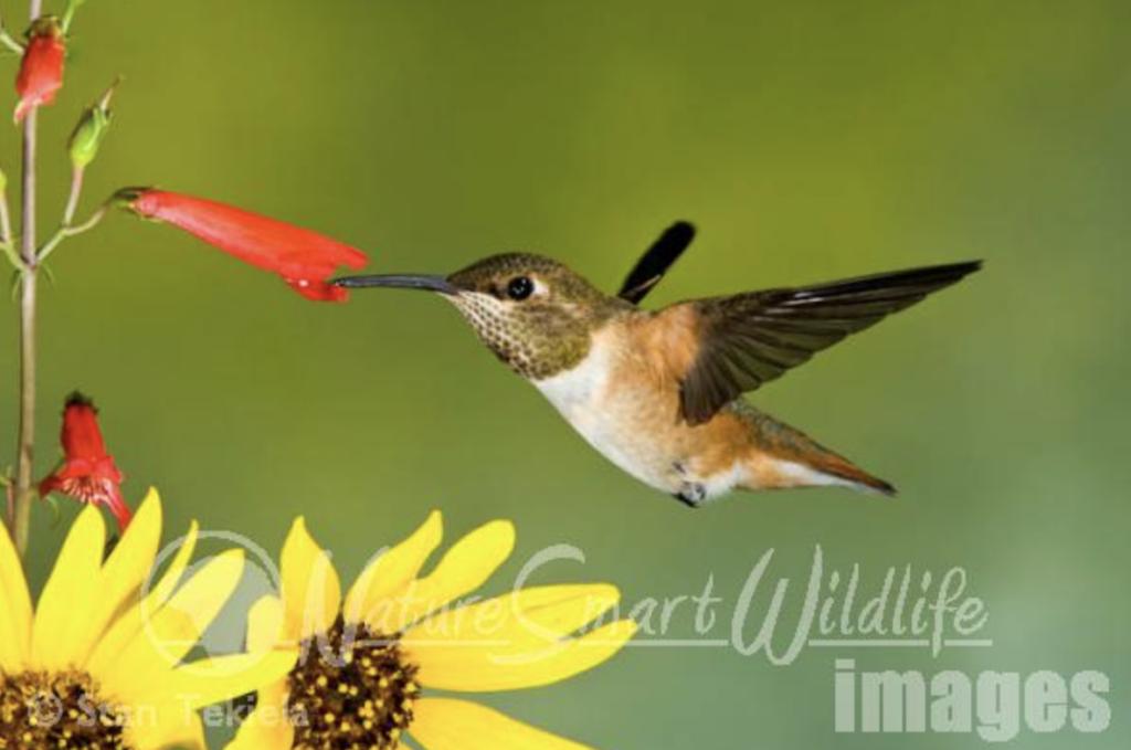 Birding for Beginners Southwest