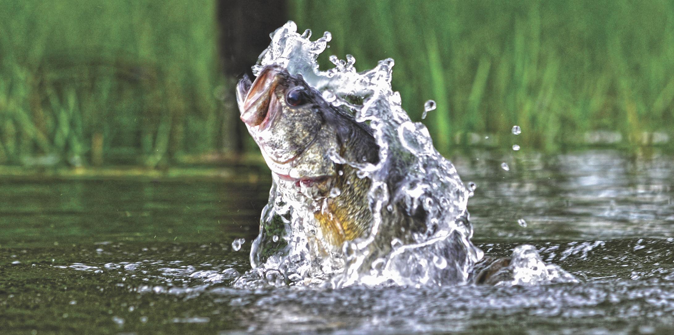 Freshwater fishing banner