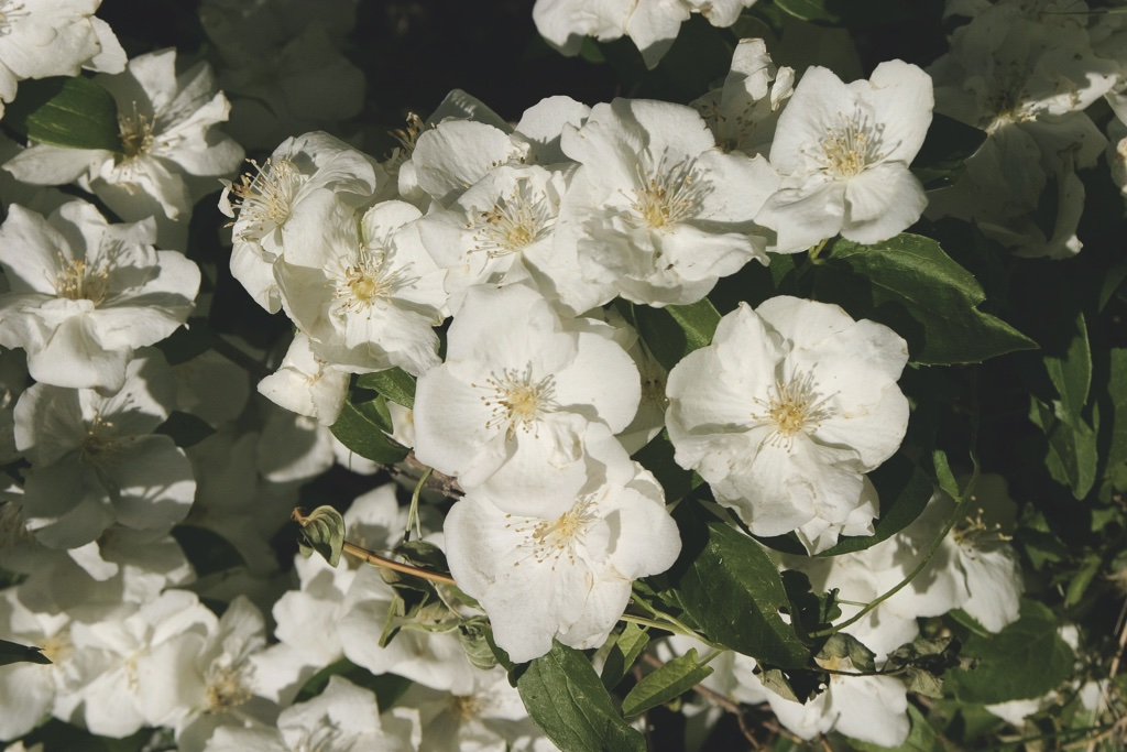 state flowers