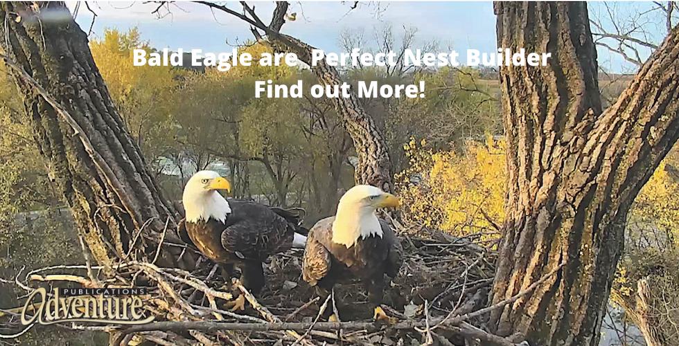 Bald Eagles Banner