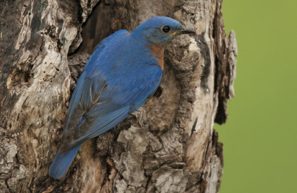 Midwest Birding Companion